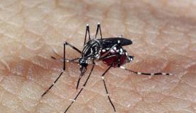 mosquitodadengue.